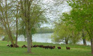 retour-des-moutons